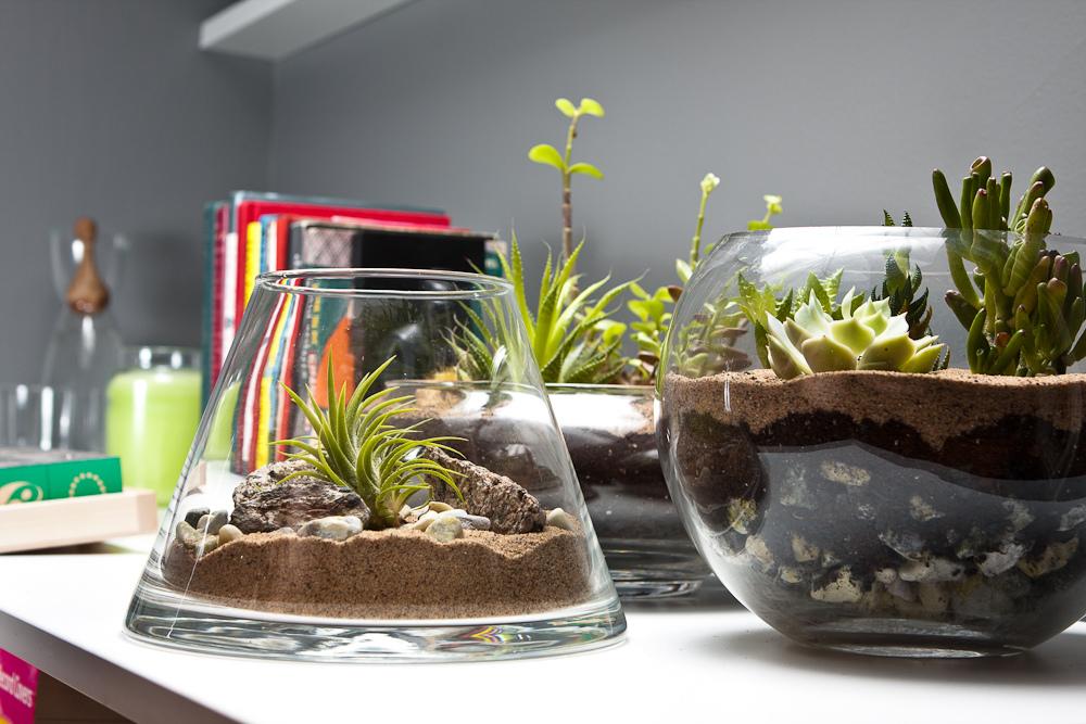 Маленьким квартиркам - матенькие растения. Композиции из суккулентов, флорариумы, террариумы - Дизайн интерьеров Идеи вашего дом