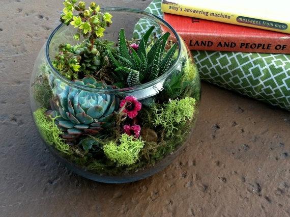 Мини сад из суккулентов своими руками