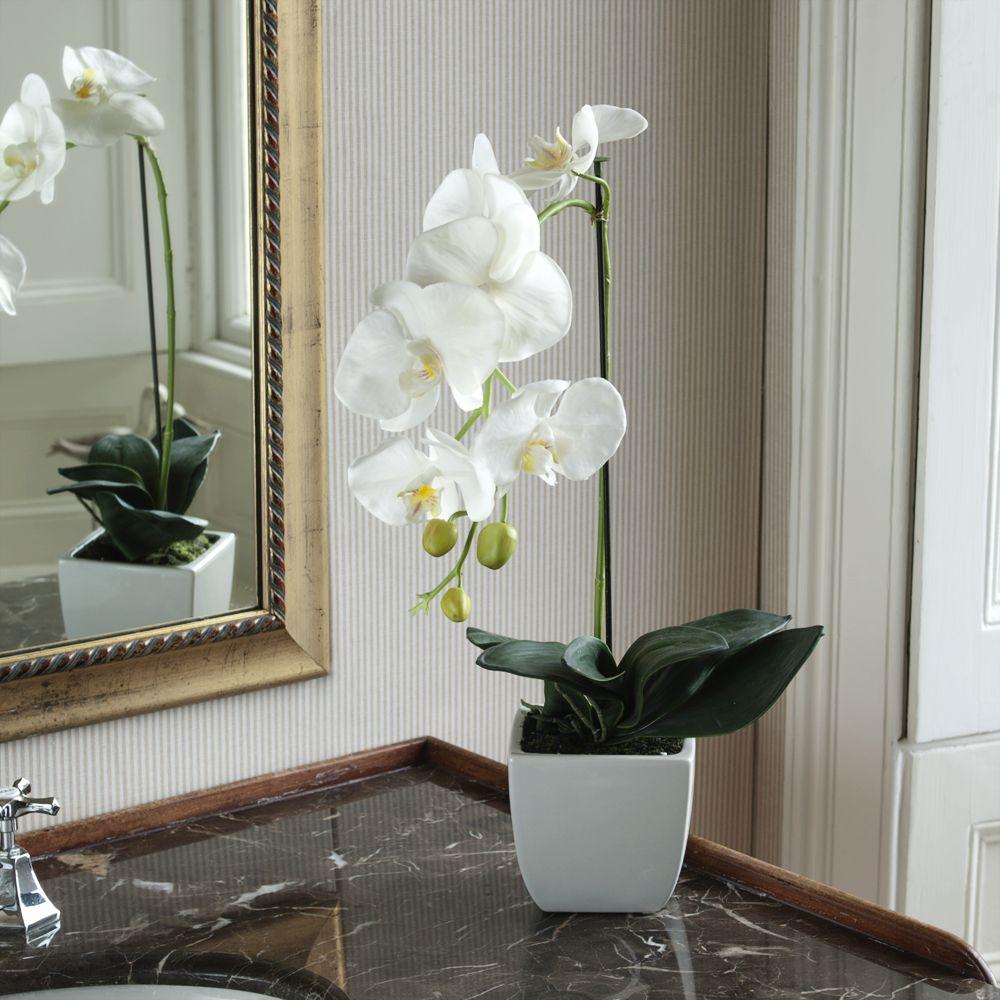 Белые орхидеи в домашних условиях