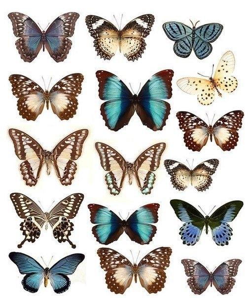 Украшение стен бабочками